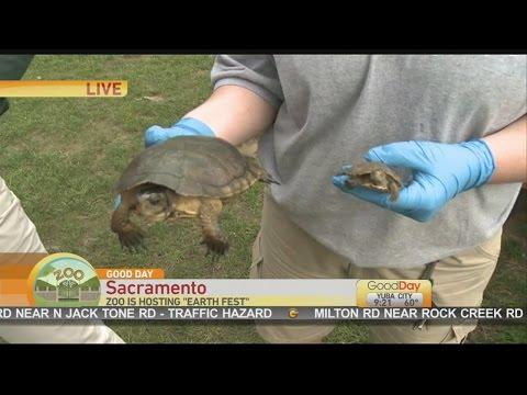 Zoo EarthFest 1