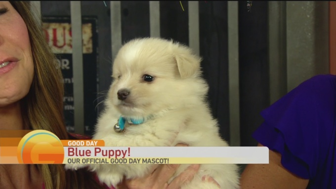 Blue Puppy Wins 1