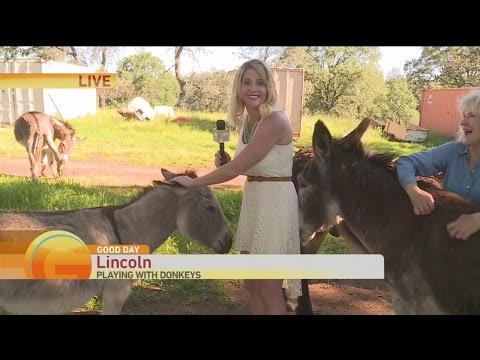 Donkey Rescue 1