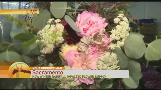 Florist 1