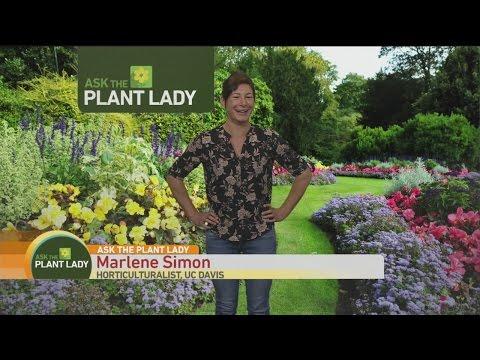 May 14 Plant 1