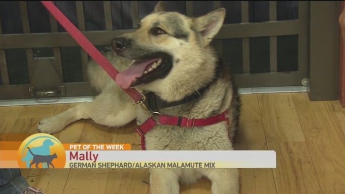 SPCA Mally 1