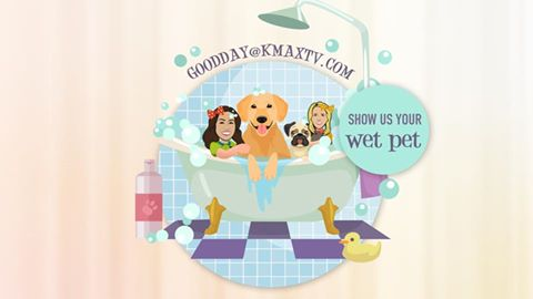 WEt Pet 1
