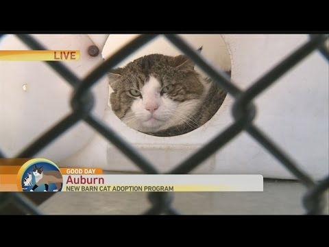 Barn Cat 1