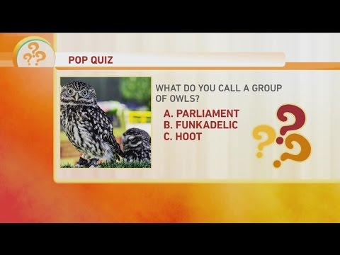 Bird Pop Quiz 3