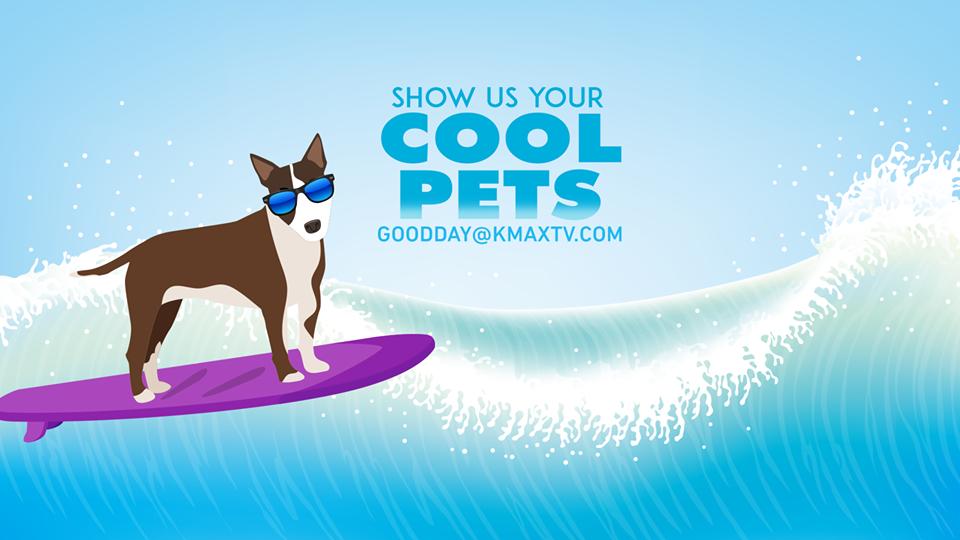 Cool Pets 1