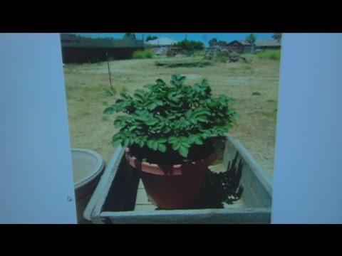 June 11 Plant Lady 1