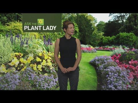 June 11 Plant Lady 2