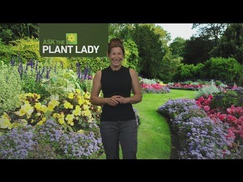 June 11 Plant Lady 3