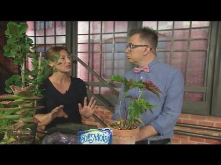 June 25 Plant Lady 3