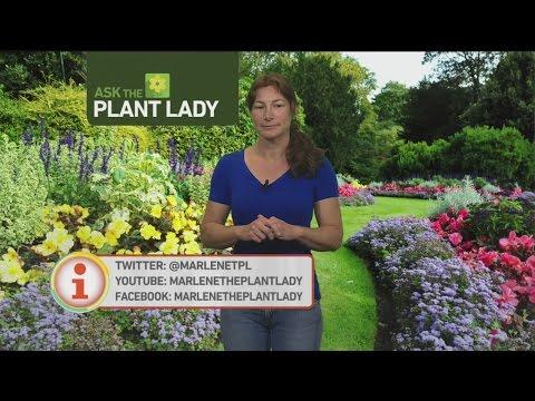 June 3 Plant Lady 3