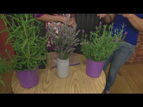 June 3 Plant Lady 4