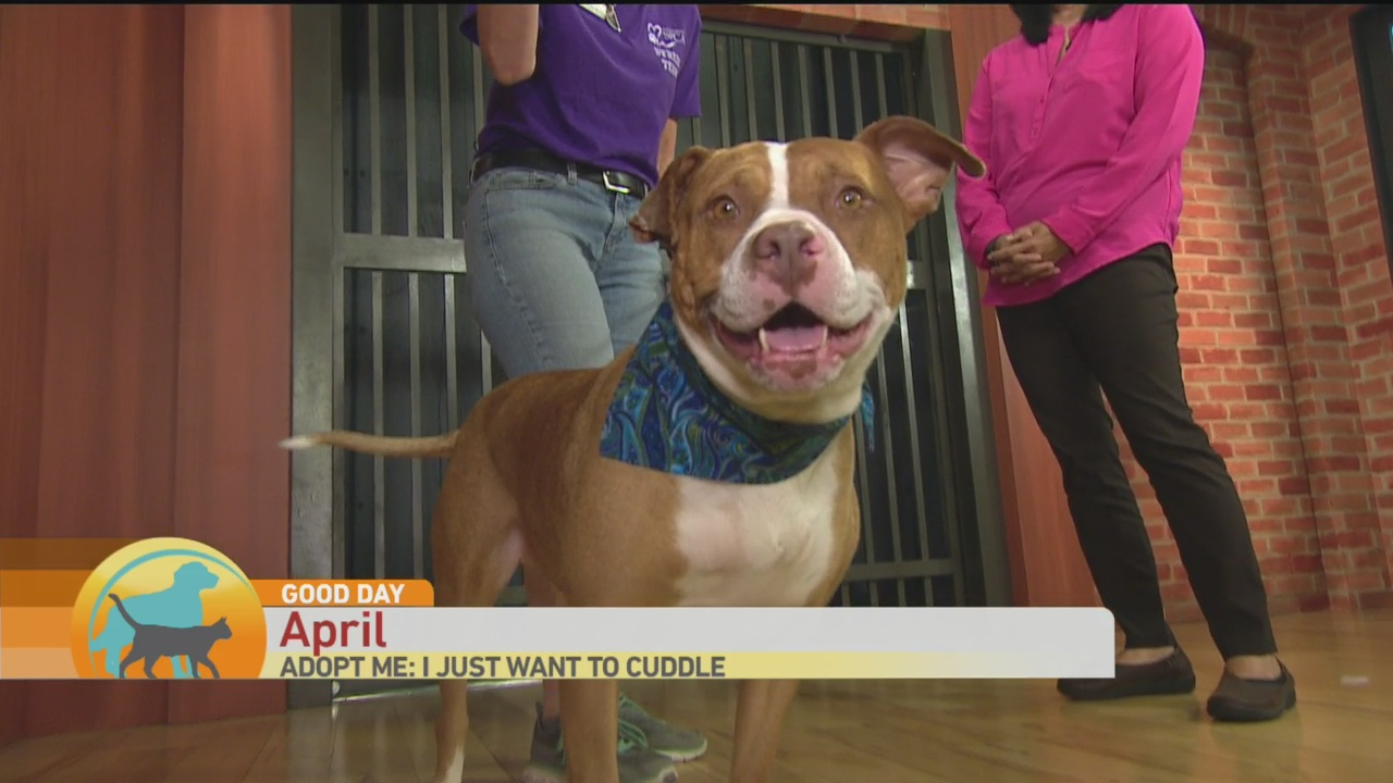 SPCA April 1