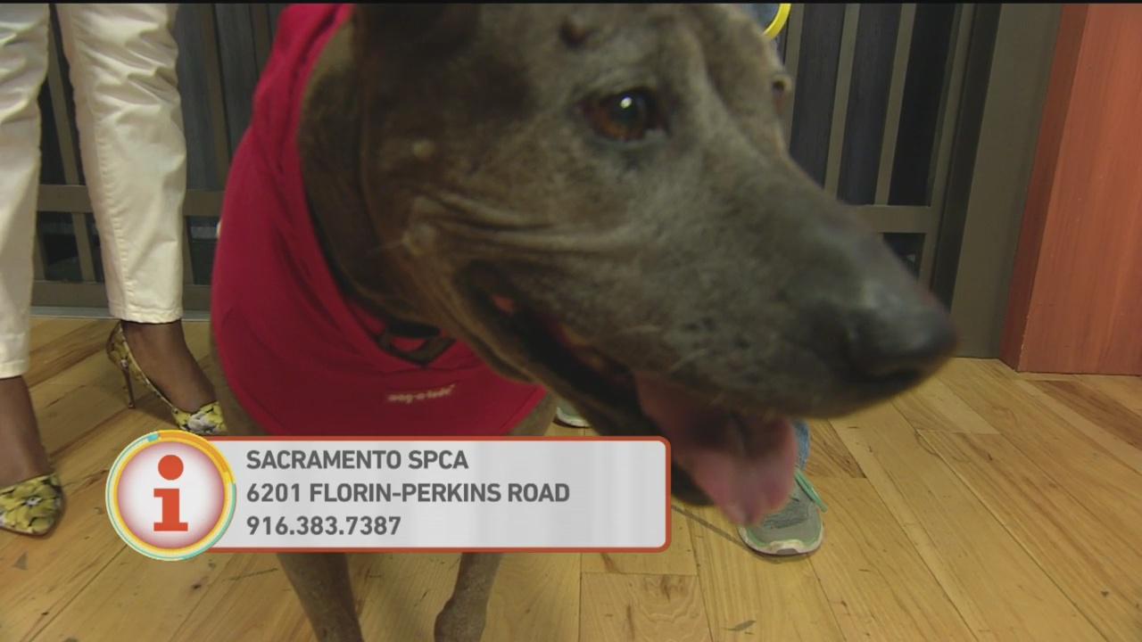 SPCA Hershery 1