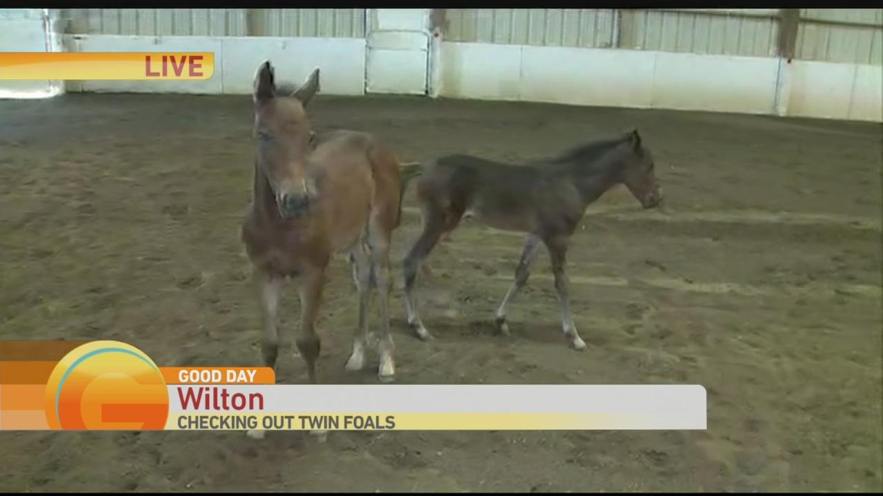 Twin Foals 1