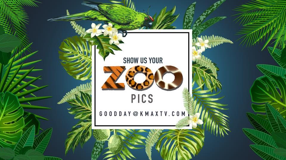Zoo q