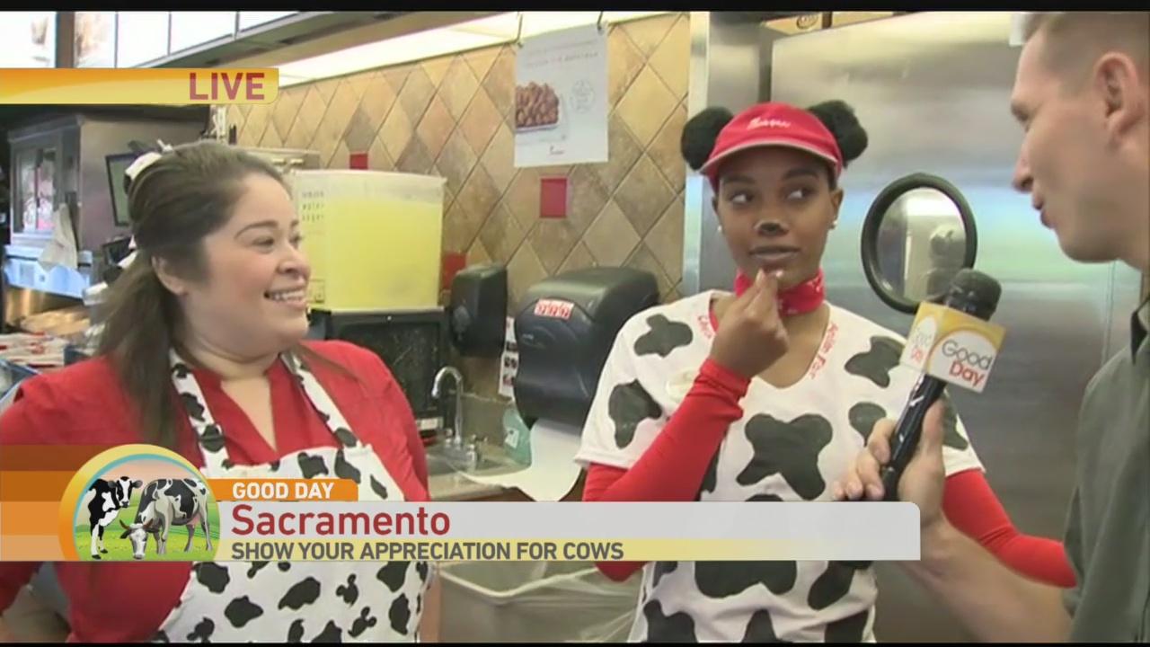 Cow Appreciation Day 2