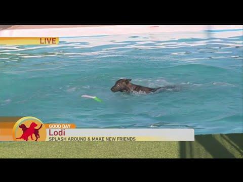 Diving Dog 1