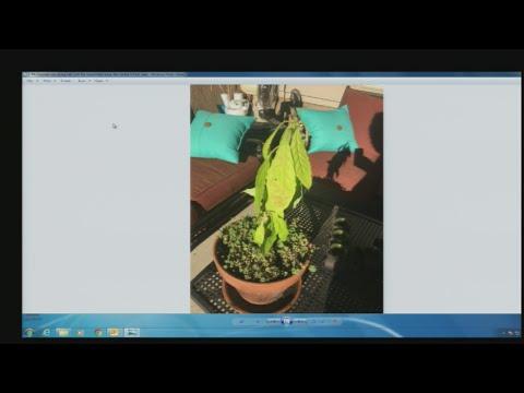 July 9 Plant Lady 1