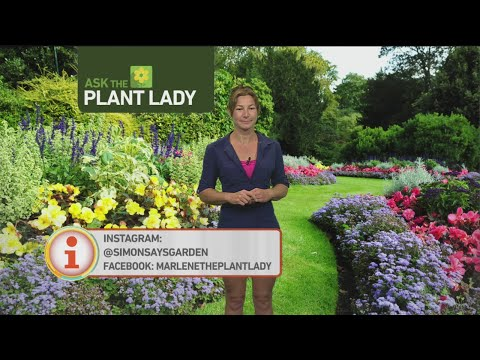 July 9 Plant Lady 2