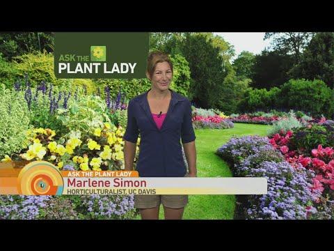 July 9 Plant Lady 3