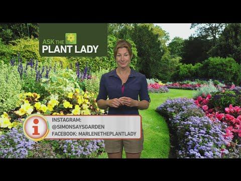July 9 Plant Lady 4