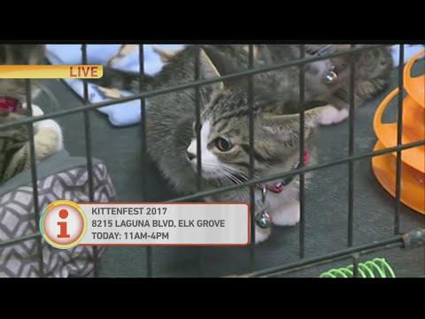 Kitten Fest 1