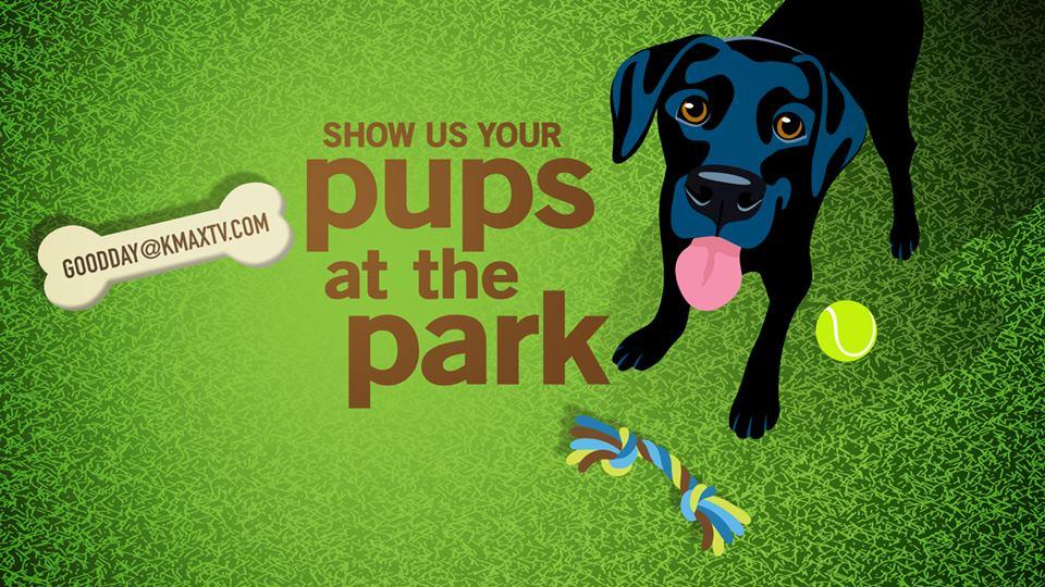 Pups at park 1