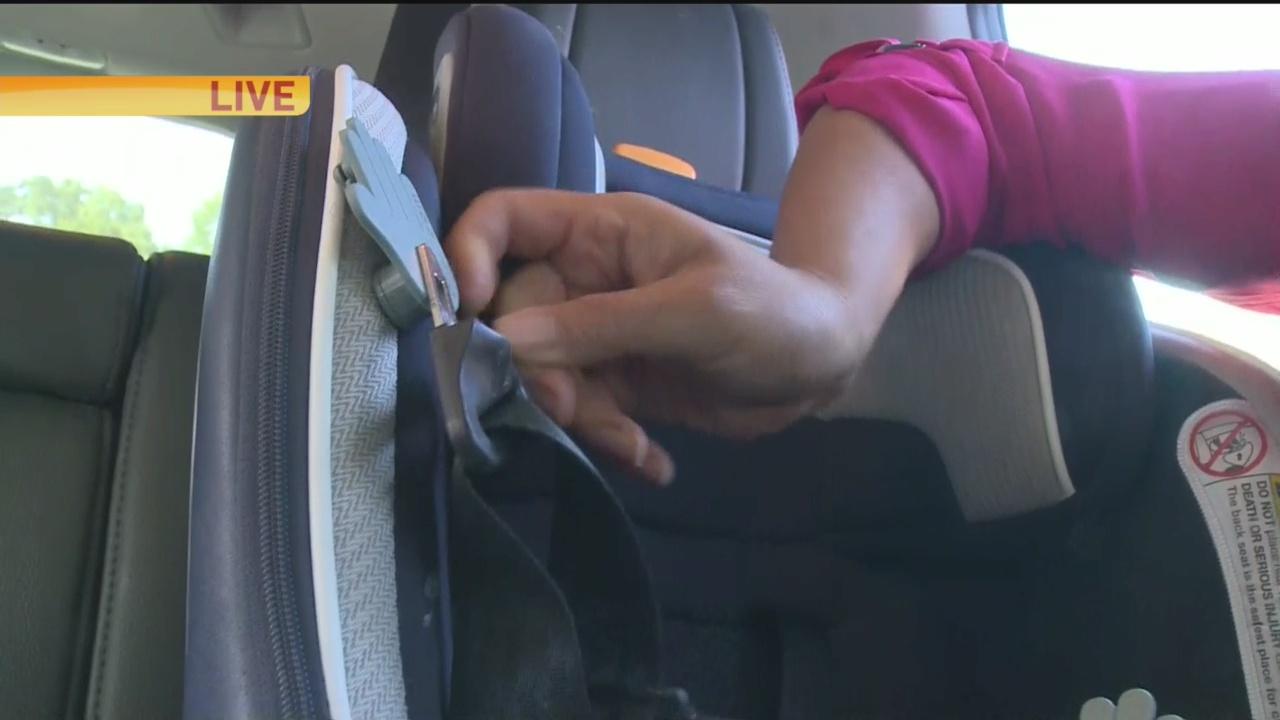 Seat Belt 1