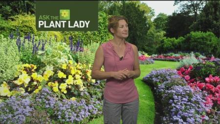 Aug 13 Plant Lady 1