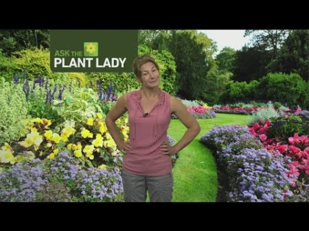 Aug 13 Plant Lady 2