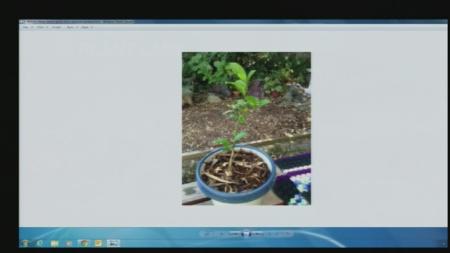 Aug 13 Plant Lady 3