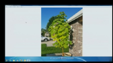 Aug 13 Plant Lady 4