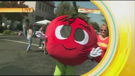 Woodland Tomato 1