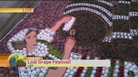 Lodi Grape 1