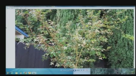 Sept 17 Plant Lady 3
