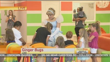 Ginger Bugs 1
